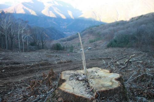 Destruction at Mount Gariwang