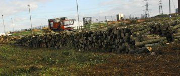 olympic trees cut down