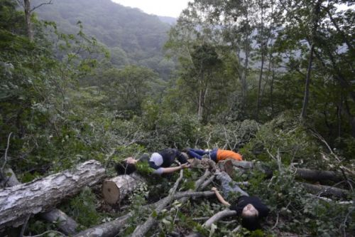 Protesters lie on trees