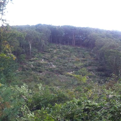 Section of forest is destroyed